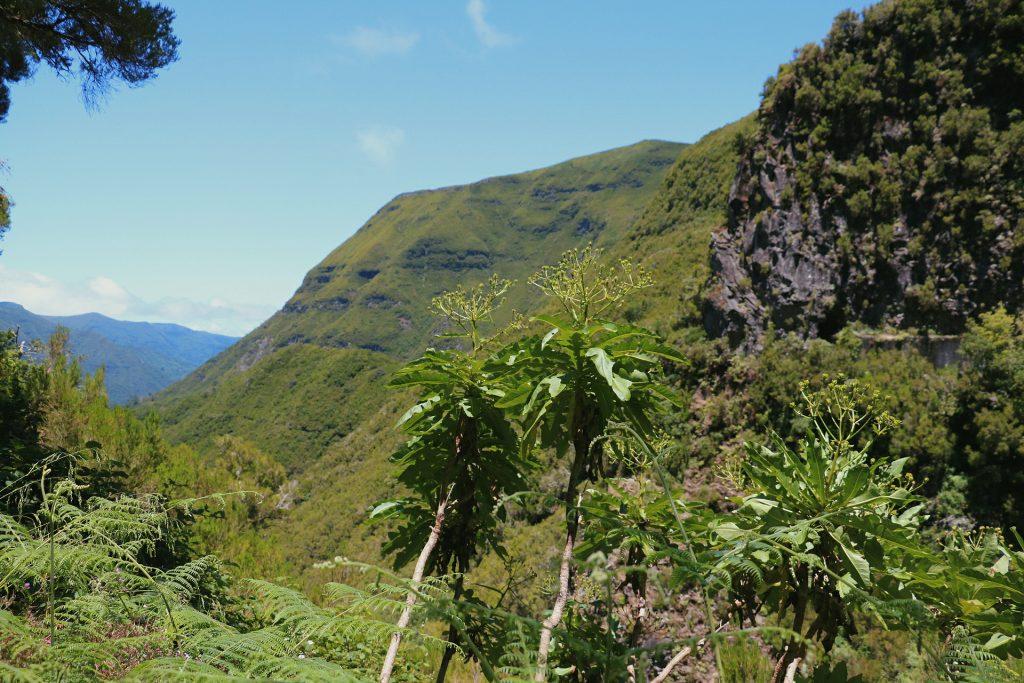 TMT_Travel_Guide_Madeira_Wanderung_1_Bild_7