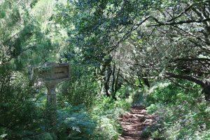 TMT_Travel_Guide_Madeira_Wanderung_1_Bild_4