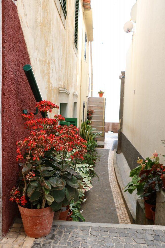 TMT_Travel_Guide_Madeira_Ausflug_Jardim_do_Mar_Strasse