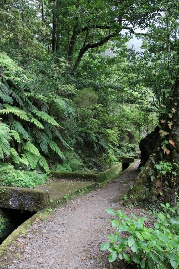 TMT_Travel_Guide_Madeira_Wanderung_2_Bild_16
