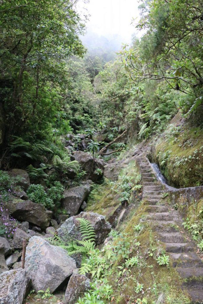 TMT_Travel_Guide_Madeira_Wanderung_2_Bild_15
