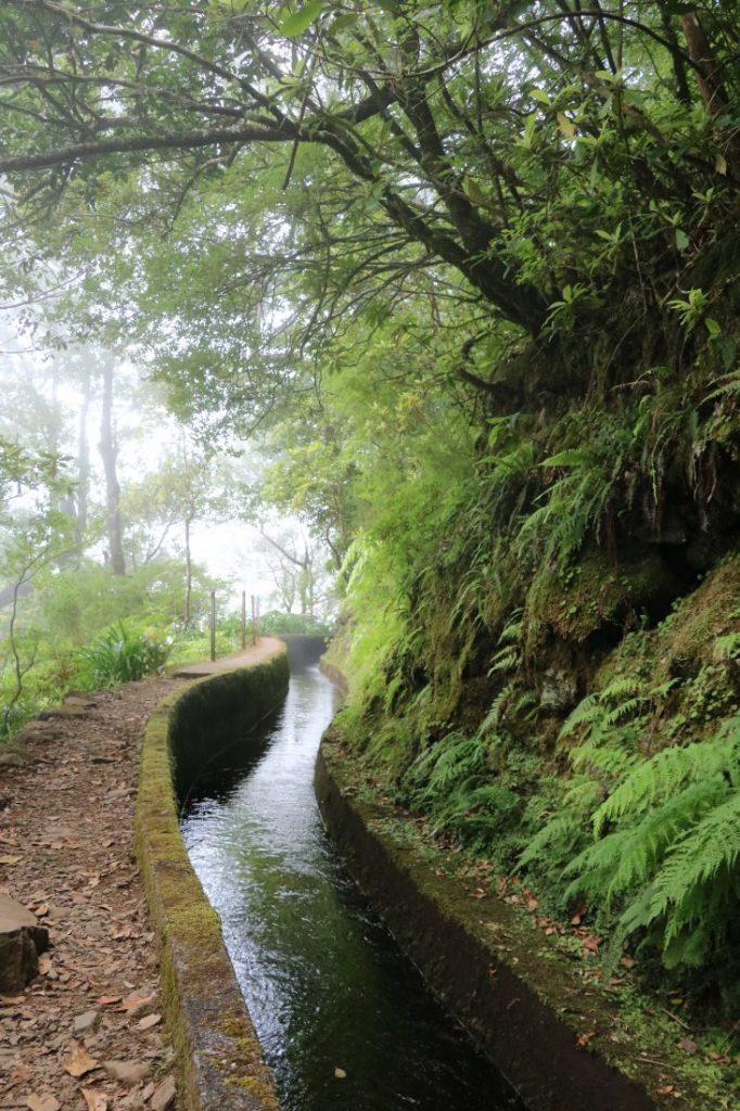 TMT_Travel_Guide_Madeira_Wanderung_2_Bild_19