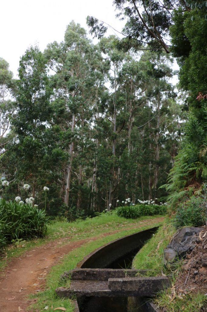 TMT_Travel_Guide_Madeira_Wanderung_3_Bild_4