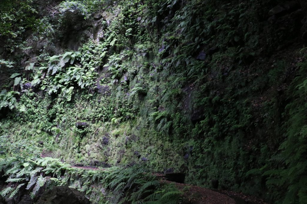 TMT_Travel_Guide_Madeira_Wanderung_3_Bild_8