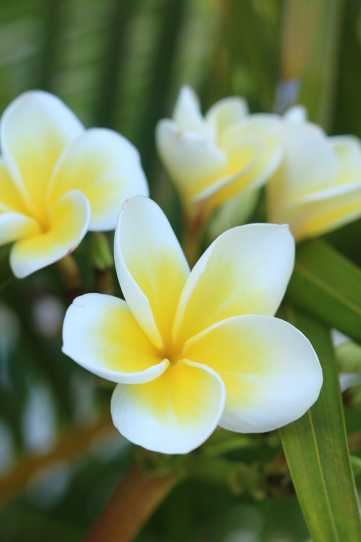 LUX_Belle_Mare_Mauritius_9